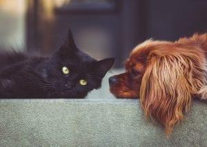 huisdieren en asbest milieucontrol